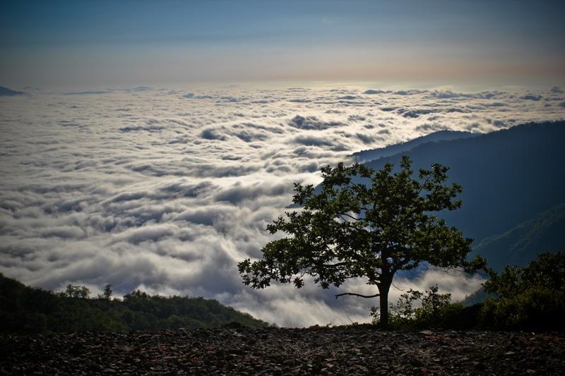 ضرورت ثبت جهانی جنگل ابر