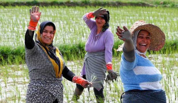 زنان شالیکار، سختی کار را با لبخند پاسخ می دهند