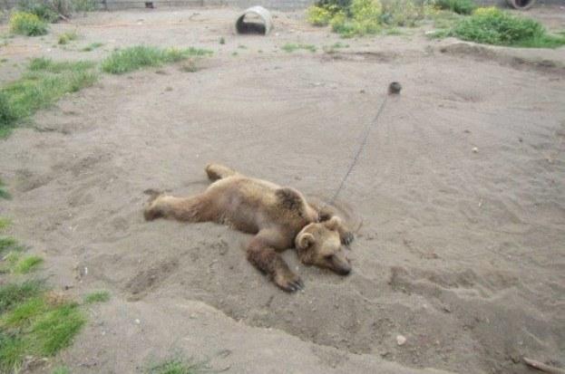 باغ وحشها باشند یا نباشند؟
