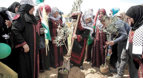 فلسطینی ها در حال کاشتن نهال درخت زیتون در شهر خان یونس در نوار غزه به مناسبت روز جهانی زمین – عکس از خبرگزاری فرانسه