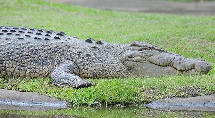تمساح جان یک مادر و کودک را در اوگاندا گرفت