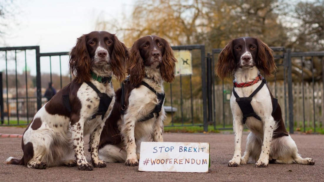 راهپیمایی سگ ها در لندن در اعتراض به برکسیت