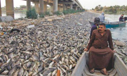 مرگ مرموز صدها هزار ماهی در رودخانه فرات