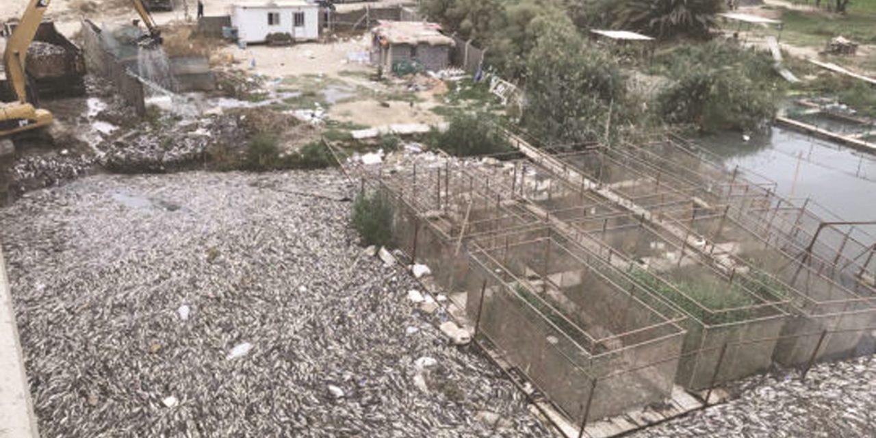 ادامه «بحران مرگ ماهیها» در عراق و تاکید بر بررسی آن در پارلمان