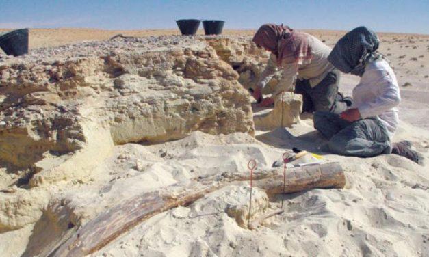 انسانهای نخستین در «شبه جزیره عرب سرسبز» زندگی میکردند