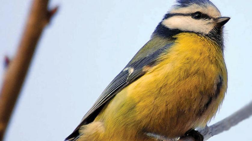 تاثیر تغییرات اقلیمی بر پرندگان