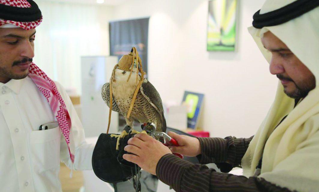 باشگاه شاهین های شکاری سعودی برای بزرگ ترین نمایشگاه آماده می شود