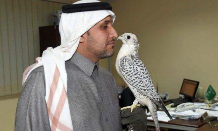 چگونه جوان ناشنوای سعودی با شاهین حرف می زند؟