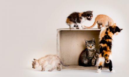 جشنواره گربه ها در انگلیس در تابستان برگزار می شود